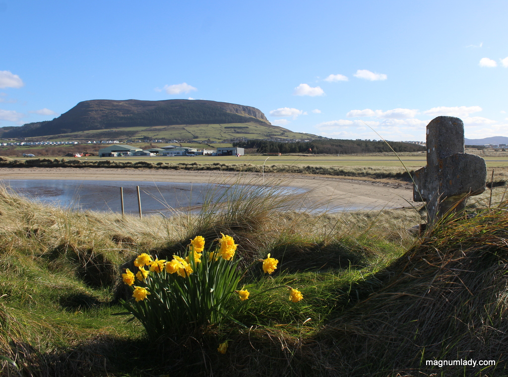Daffodils and Knocknarea