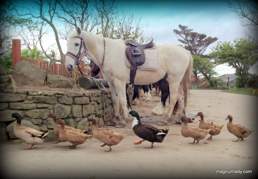 Quacking good fun