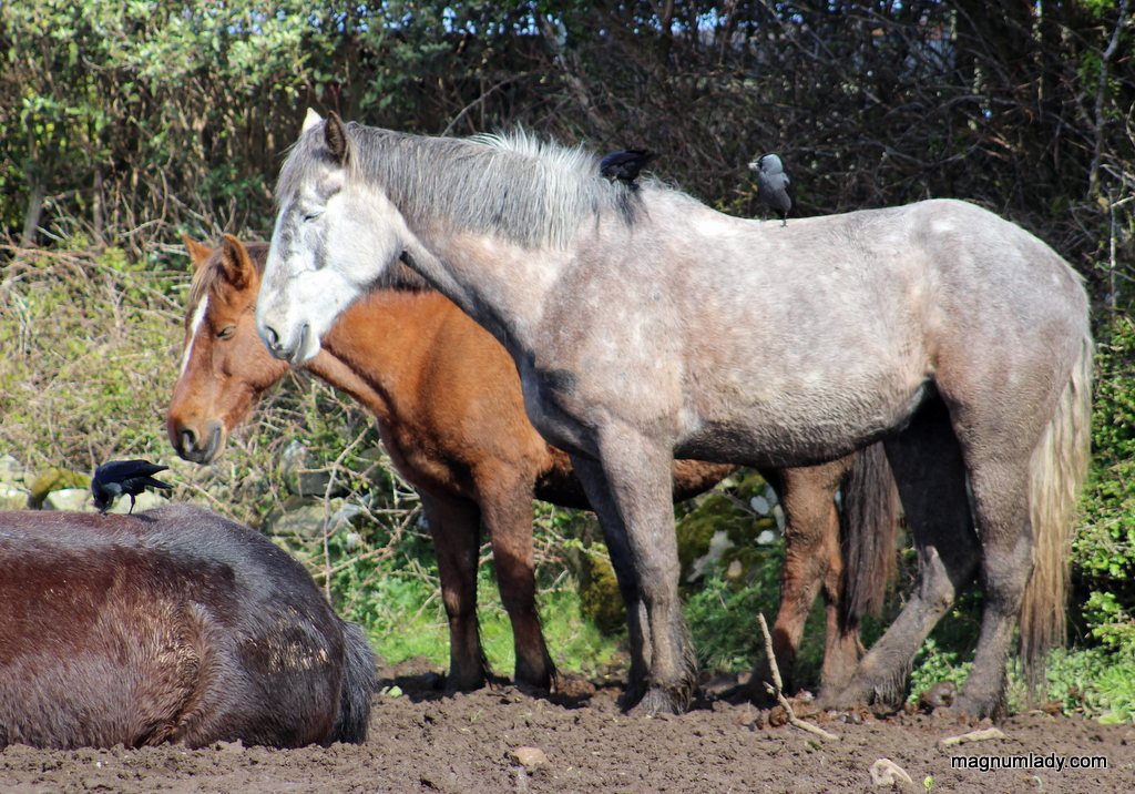 Horse hairdressers