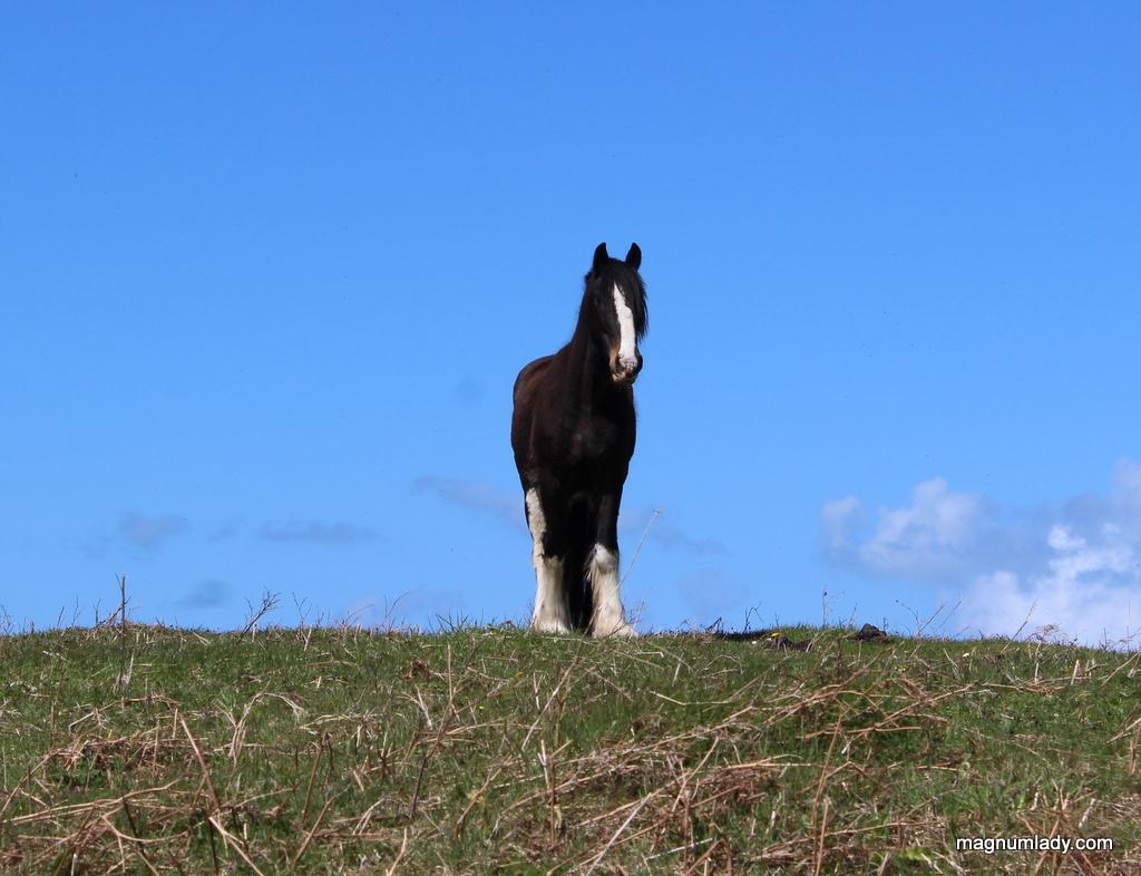 Horse on the island
