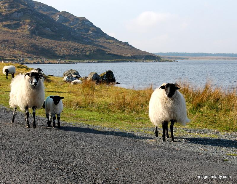 Ten Sligo Experiences