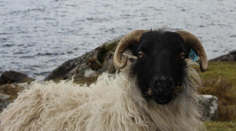 Lough Easkey